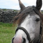 Pony on Aran Island