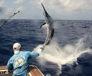 Catch a Marlin